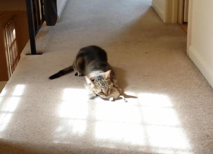 Video: Nala (cat) + Catnip = Win